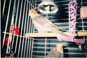 pretty-birds_226556436_o